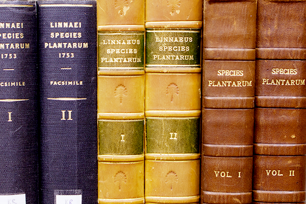 Photo of book spines from the rare books room